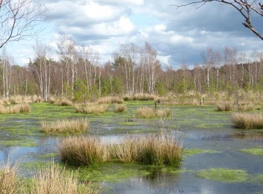 Wietzendorfer Moor
