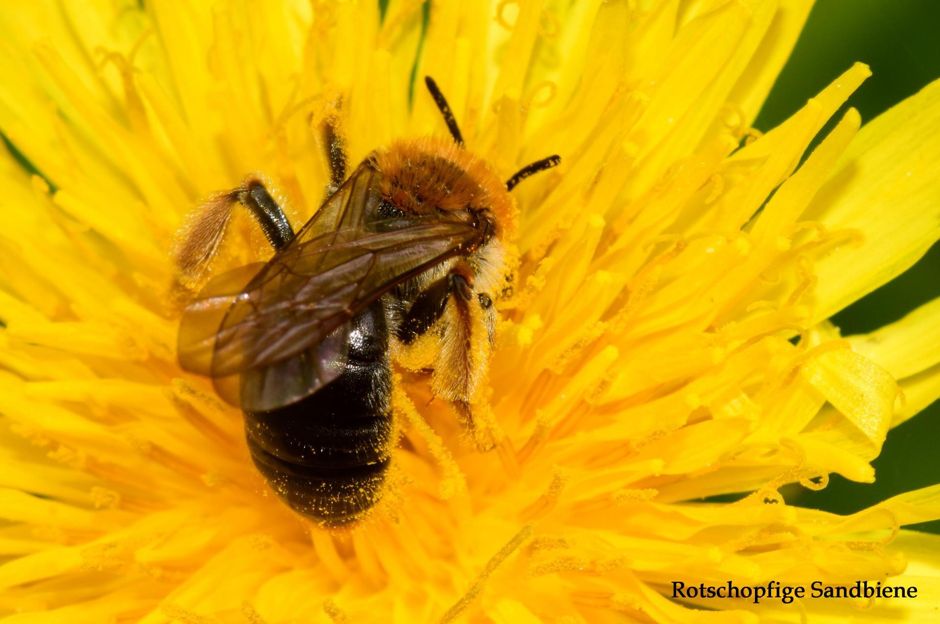 Insekt Blume