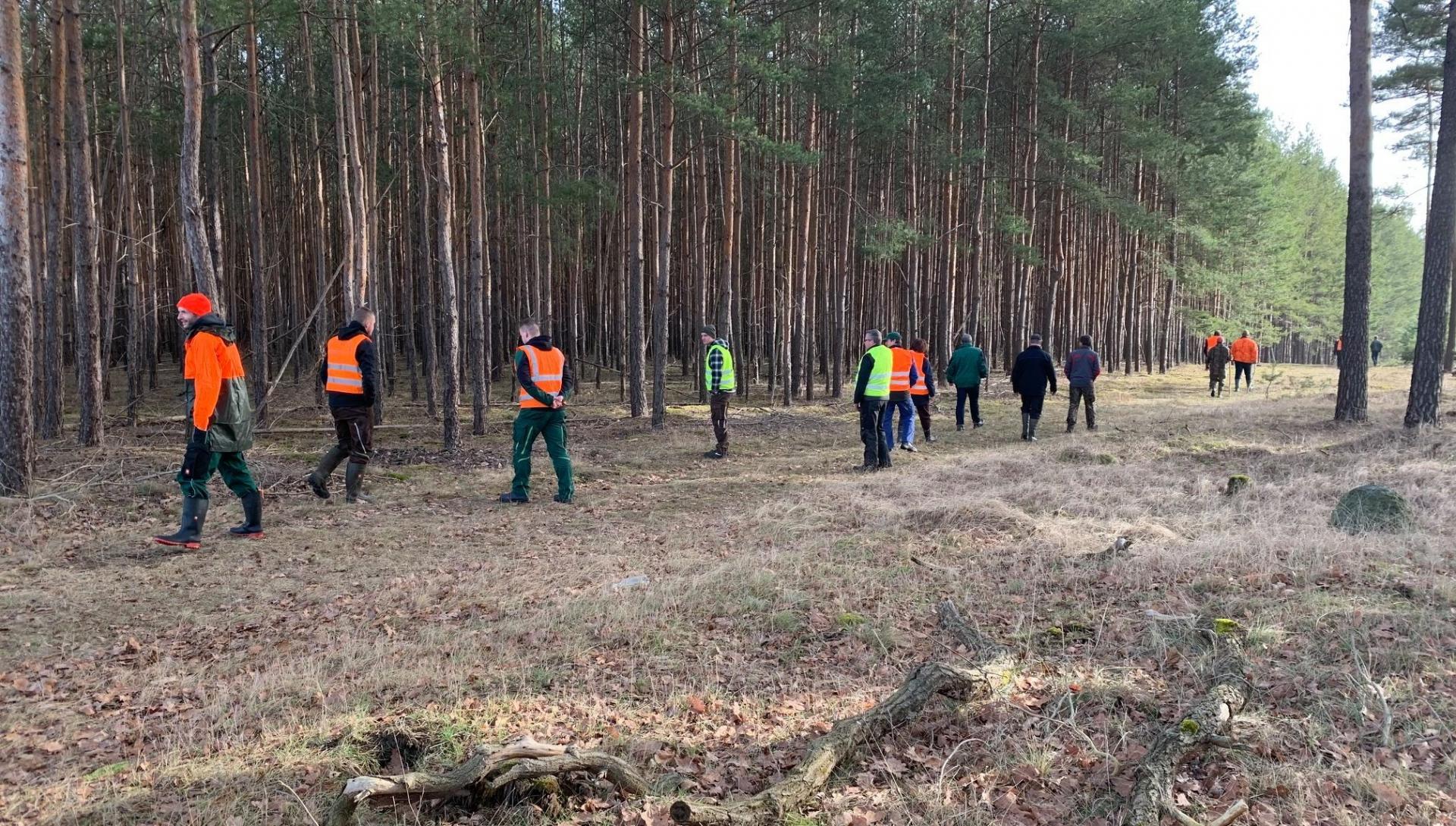 Fallwildsuche in einem Waldstück nahe Trebitz