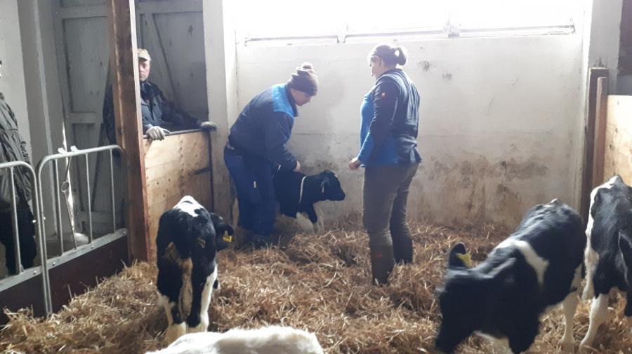Lehrunterweisung zum Umgang mit Rindern