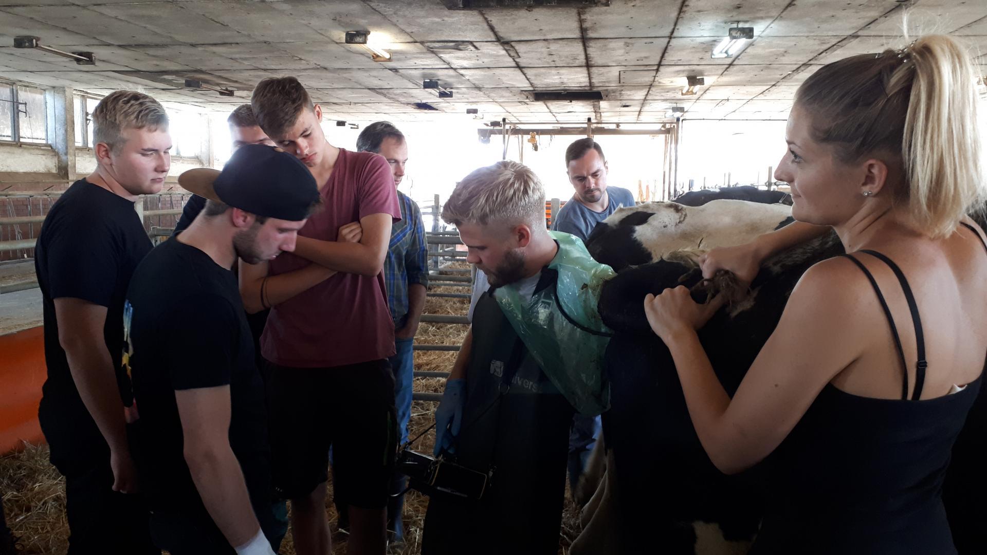 Lehrunterweisung Fruchtbarkeit des Rindes