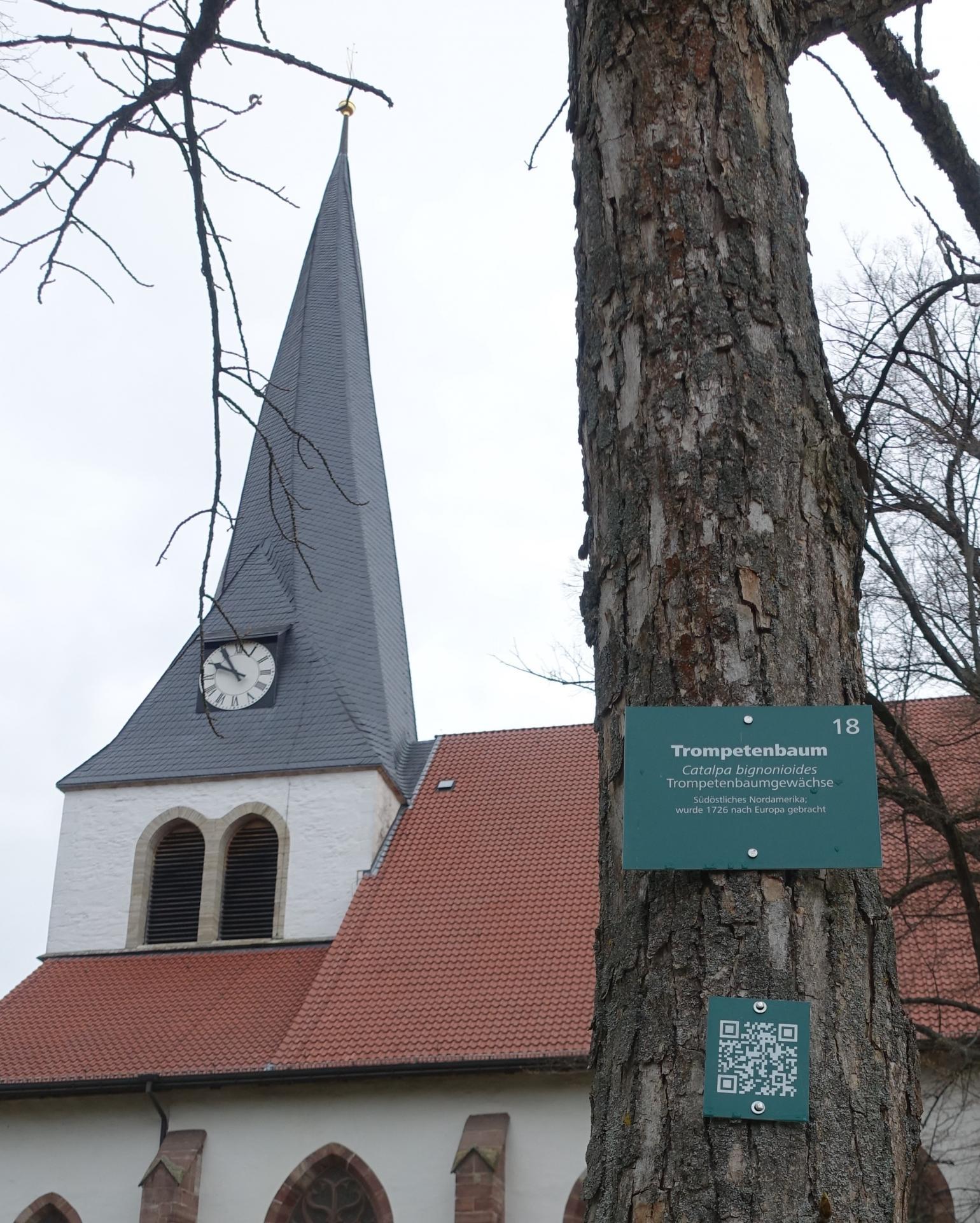 Ein Trompetenbaum mit kirchlichem Hintergrund