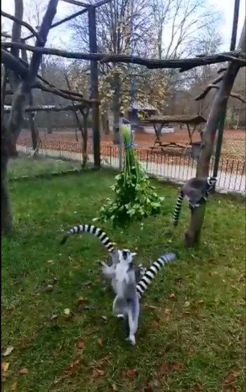 Kattas fressen