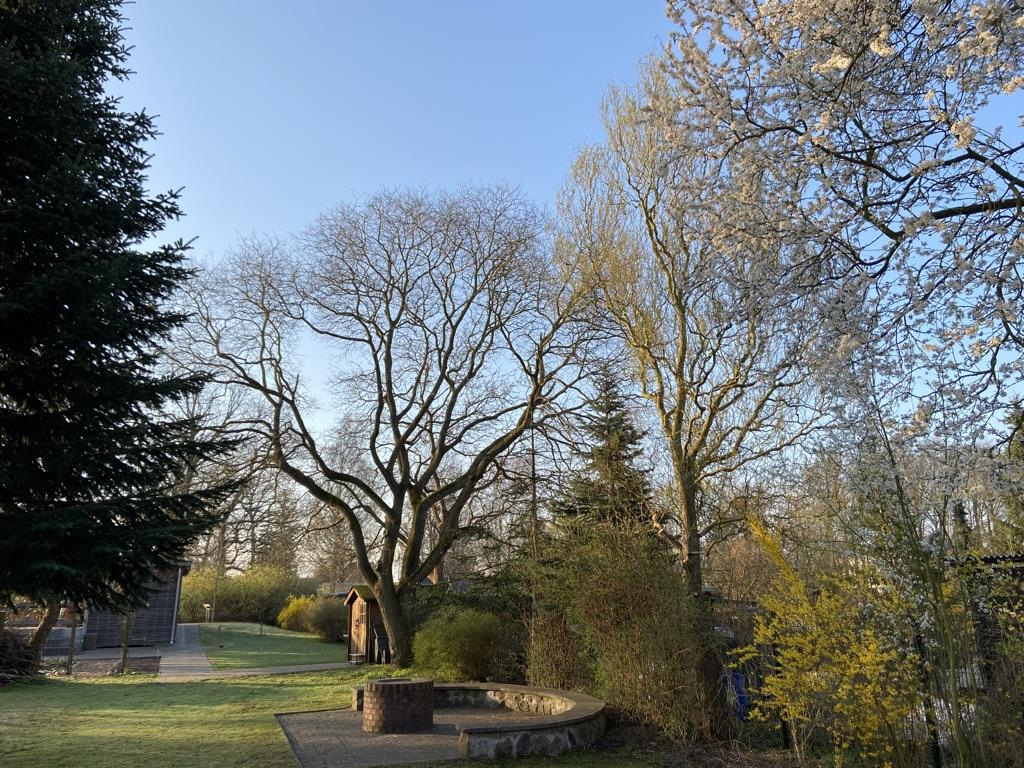 Schulgarten im Frühling