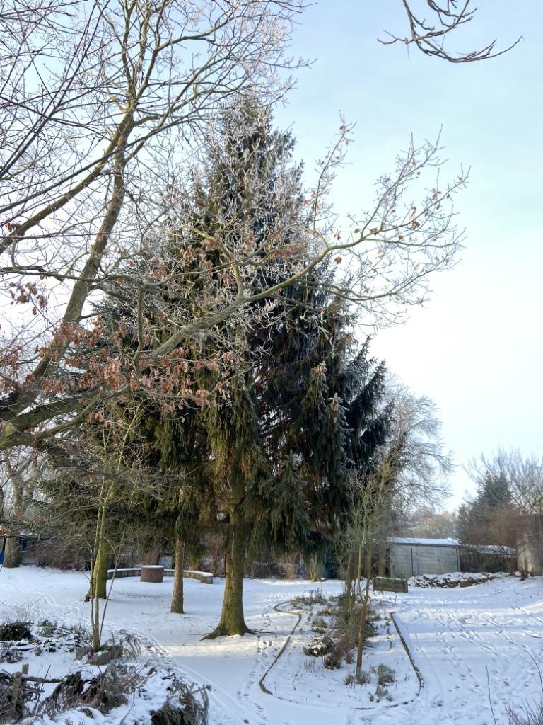 Schulgarten im Winter