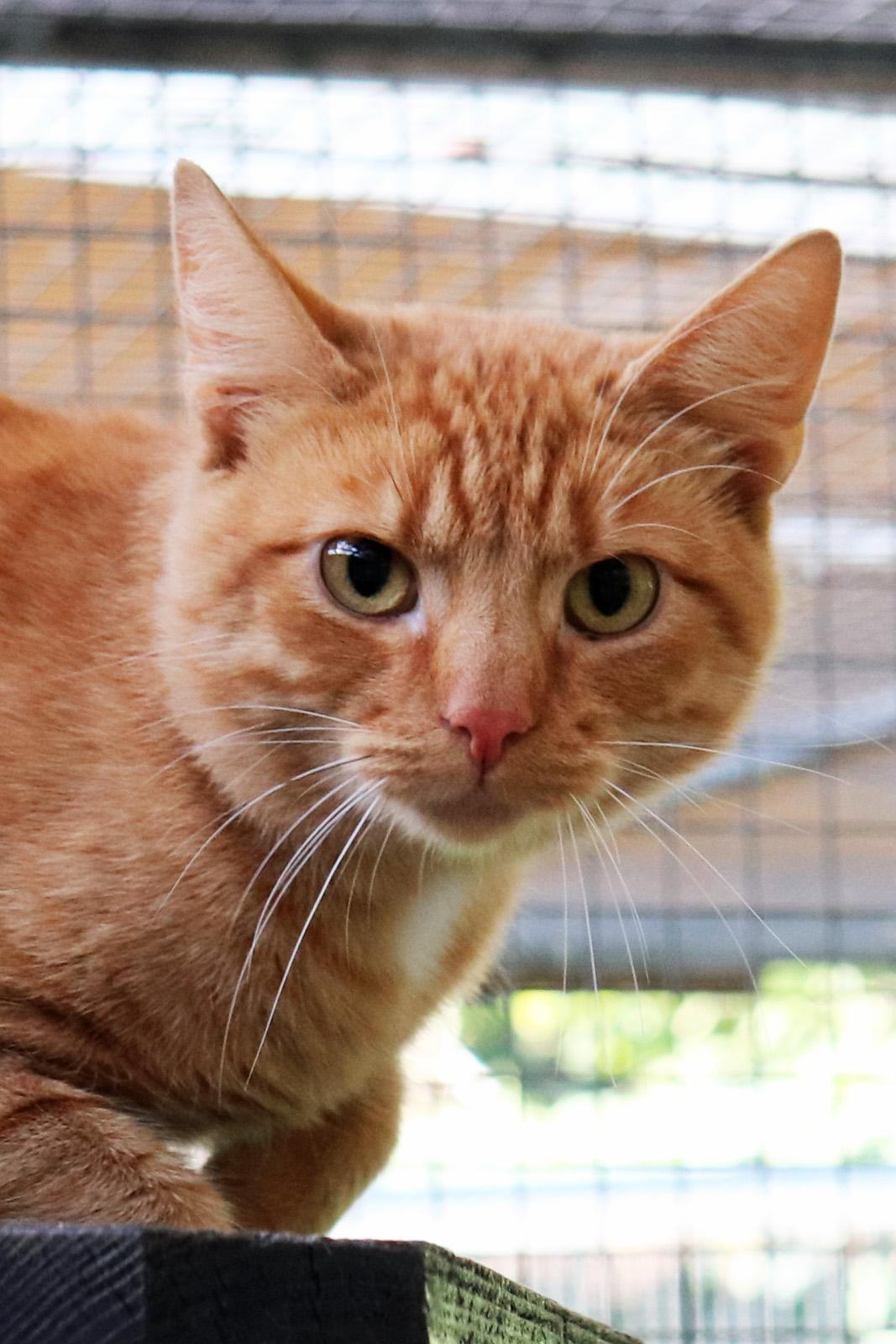 Garfield  - 29768