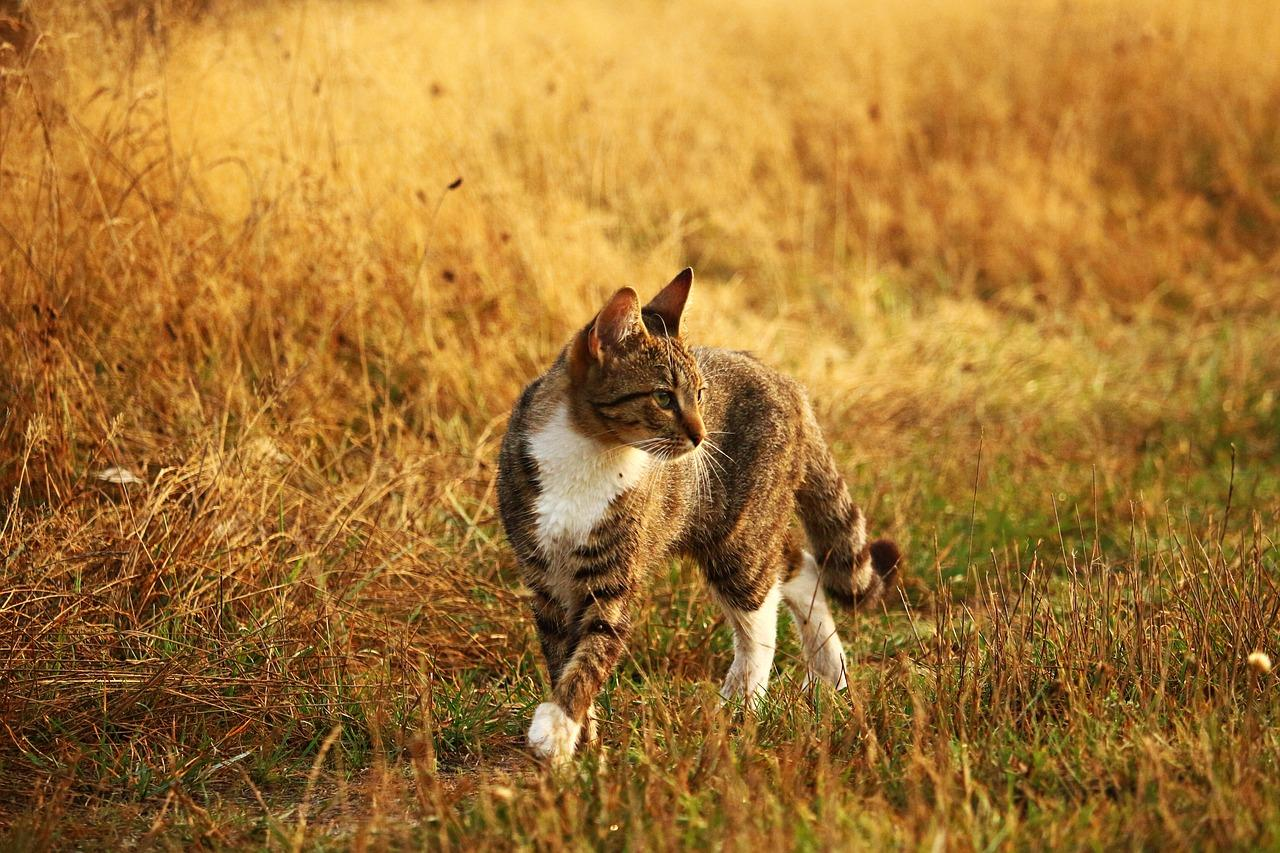 Katze Herbst