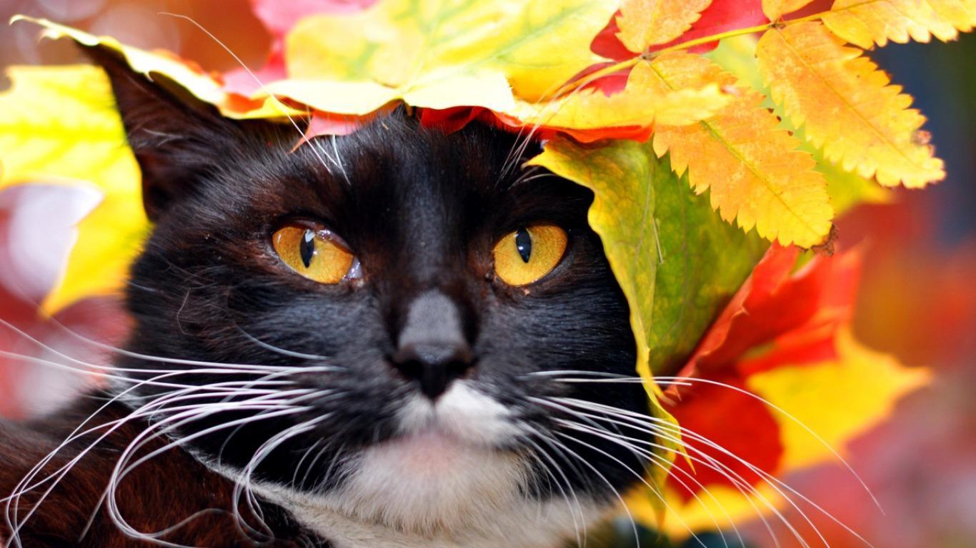 Herbst Katzen