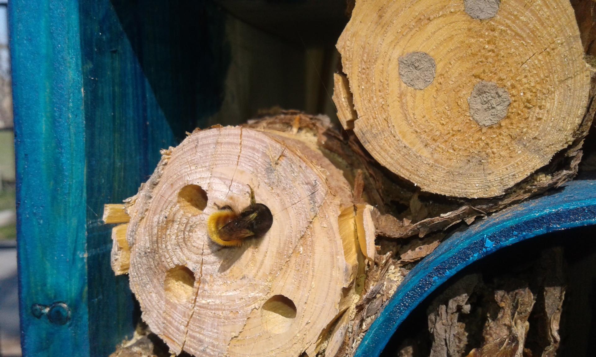 Bewohner im neuen Insektenhotel