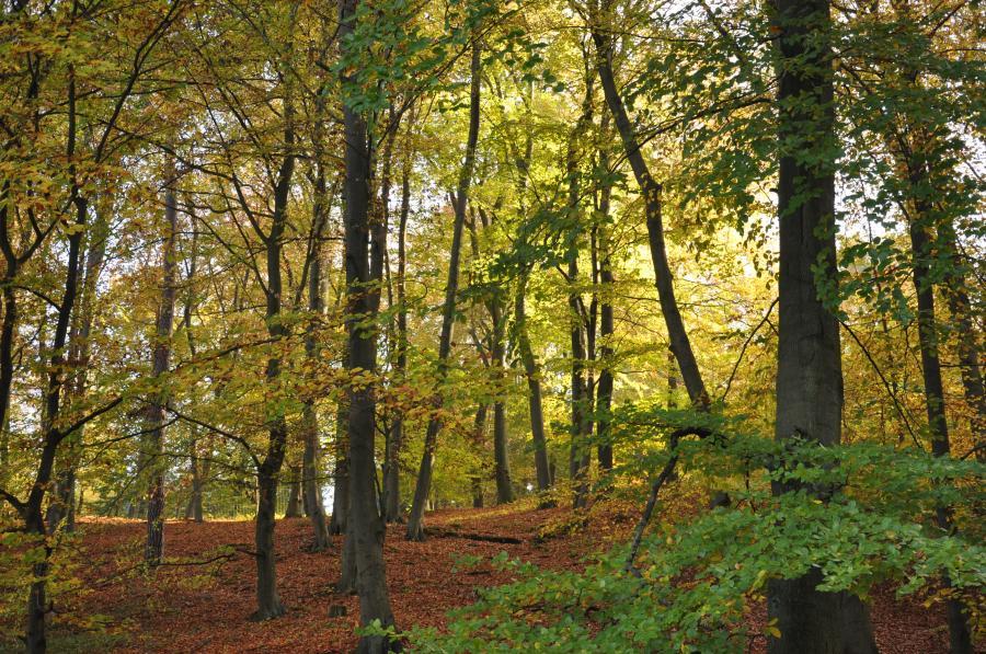 Herbstwald, Foto: Gerigk