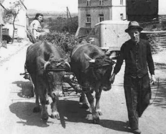 Nikolais Johann fährt das auf den gepachteten Wegrändern gemähte Gras nach Hause