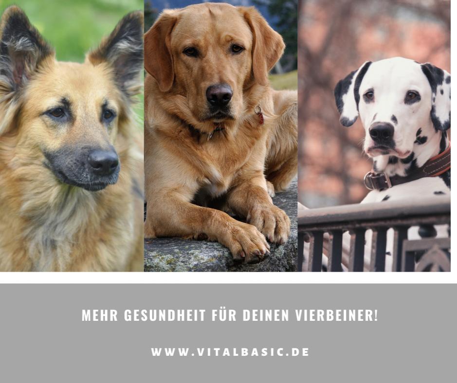 Gesundes Hundefutter frei von Chemie und Konservierung in Lebensmittelqualität