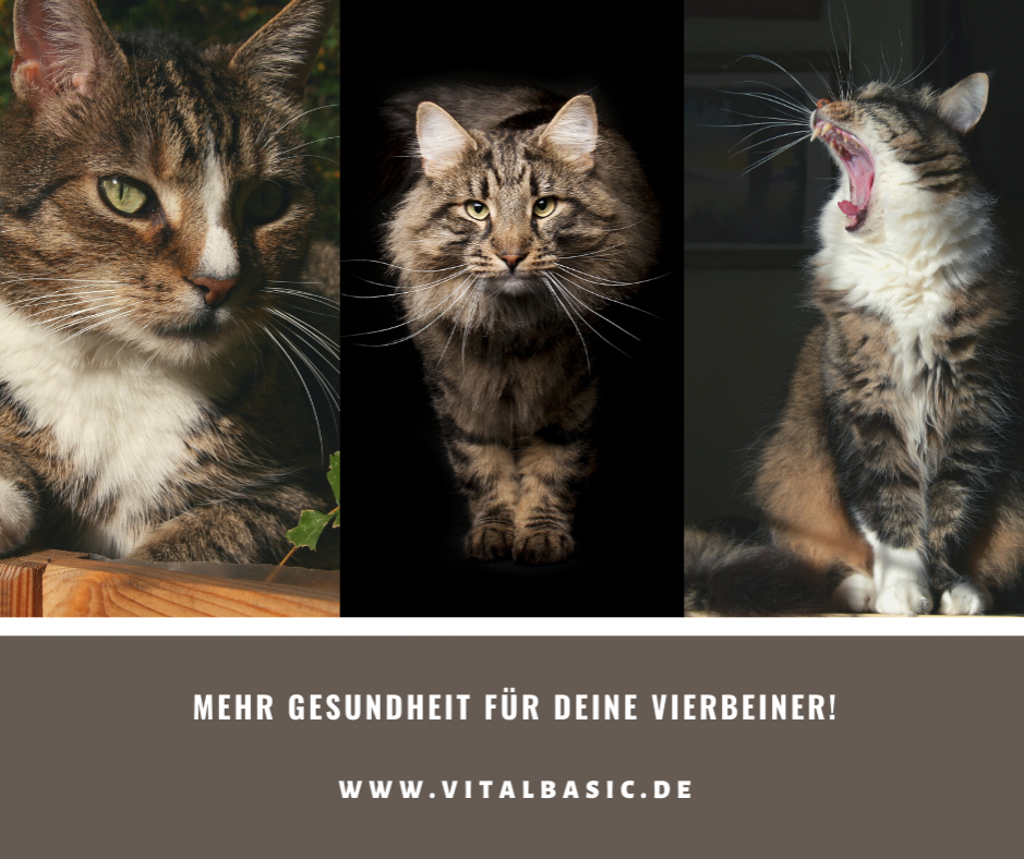 Gesundes Katzenfutter frei von Chemie und Konservierung in Lebensmittelqualität