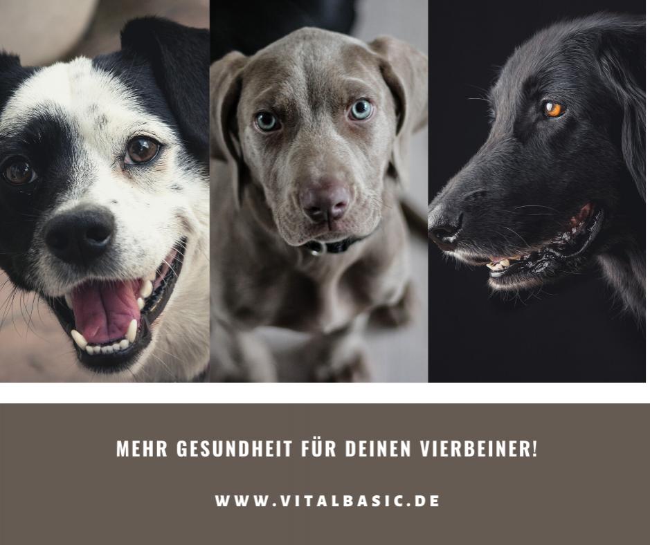 Gesundes Hundefutter frei Chemie und Konservierung in Lebensmittelqualität