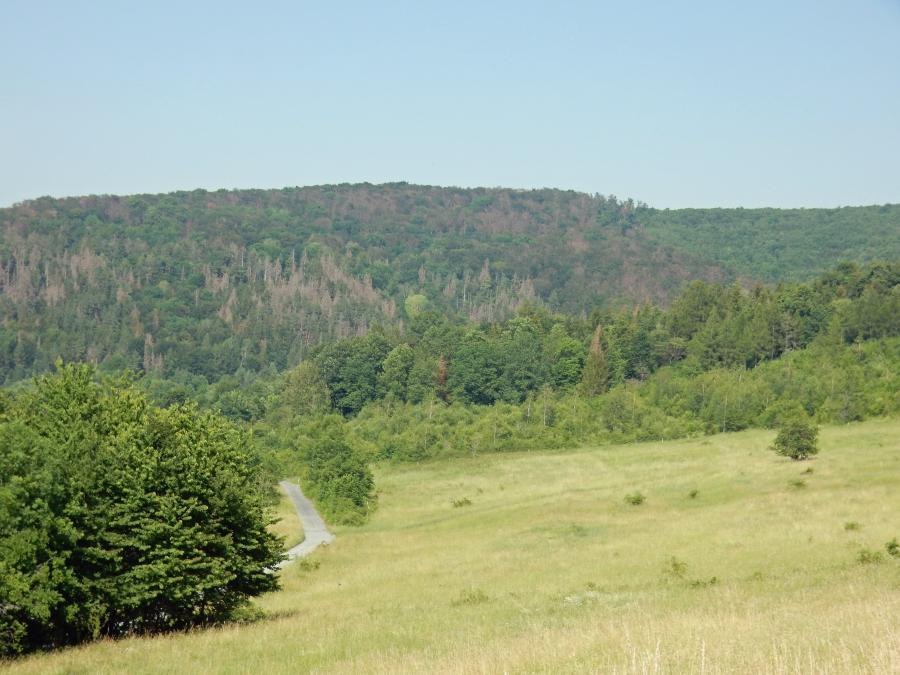 Der Klimawandel hat den Bäumen in steileren Lagen des Nationalparks stark zugesetzt, hier der Burgberg auf der Westseite des Nationalparks am 26.06.2019. Foto Nationalparkverwaltung