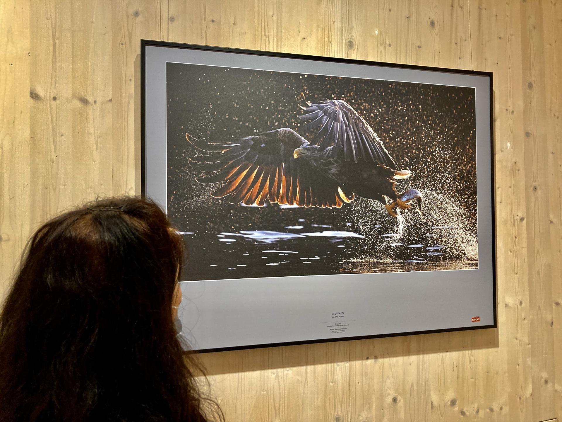 Preisgekrönte Naturfotografie aus aller Welt