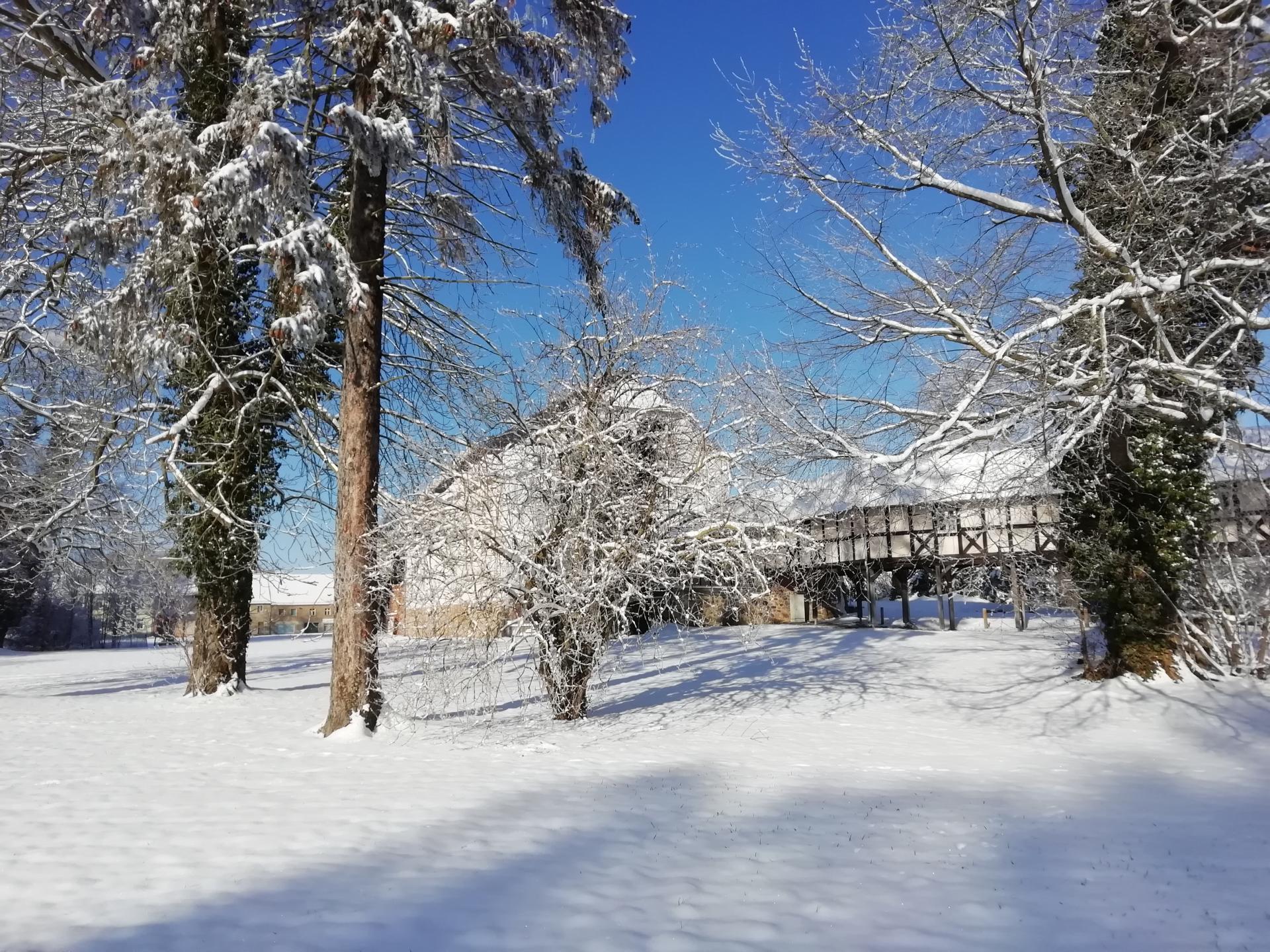 Winterwanderung im Schlosspark