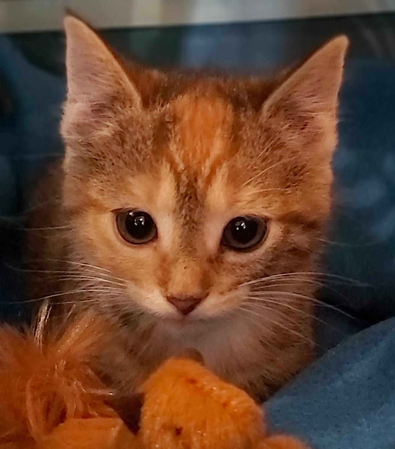 Blacky-Kitten 1