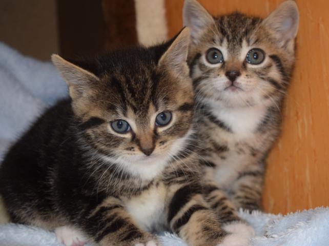 Flöckchen kitten