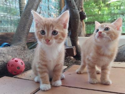 kitten biene