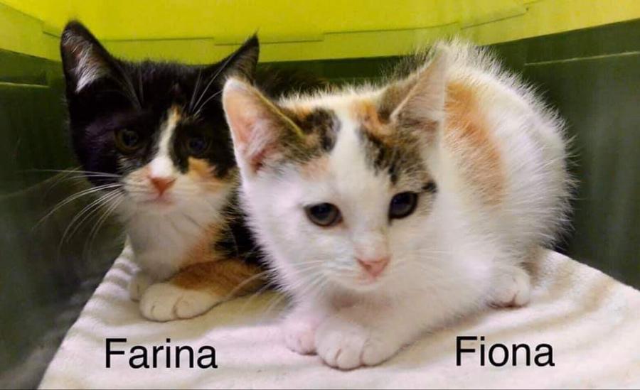 Fiona-farina