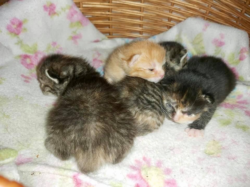 Mona-Kitten-1