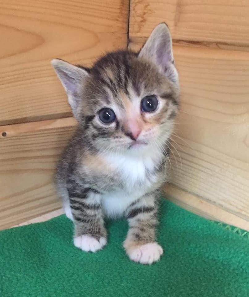 Katzenkind-Mona1