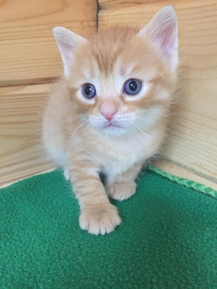 Katzenkind-Mona2