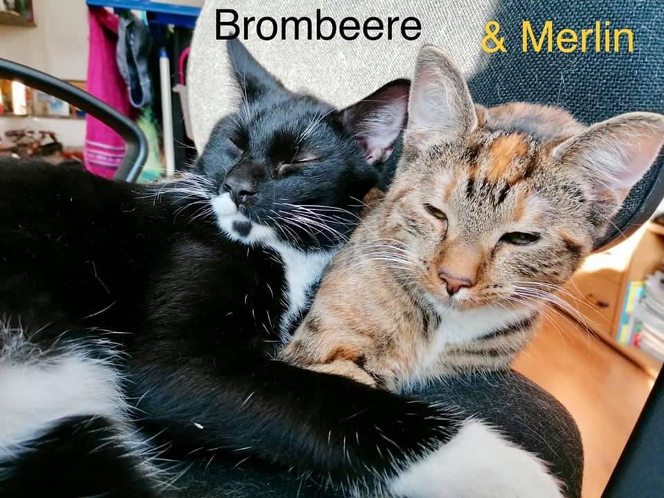 Brombeere und Merlin