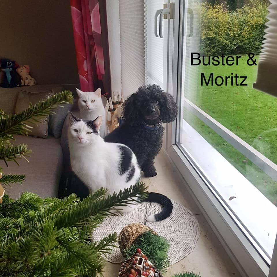 Buster und Merlin