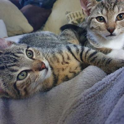 Cleo und Lino