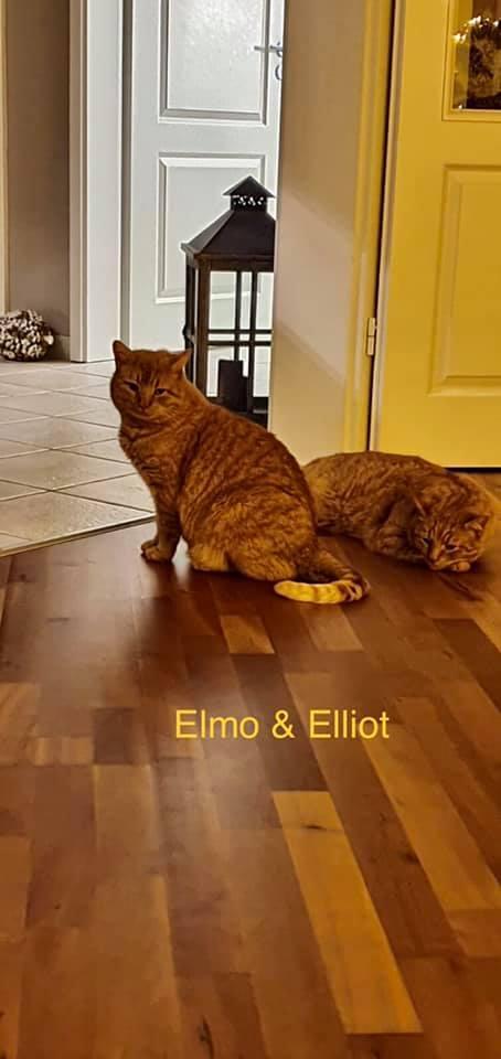 Elmo und Elliot