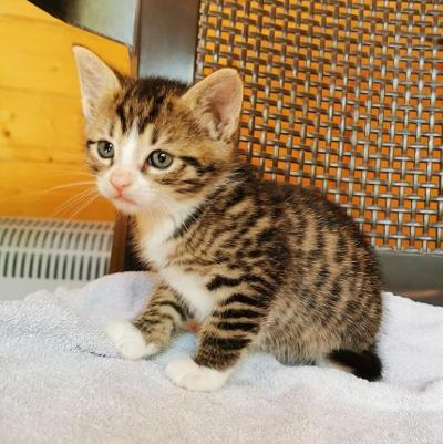 Melly kittten