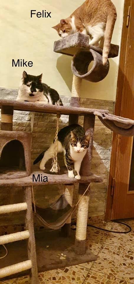 Felix, Mike und Mia