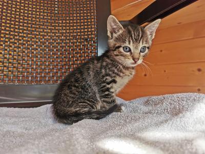 Melly kitten