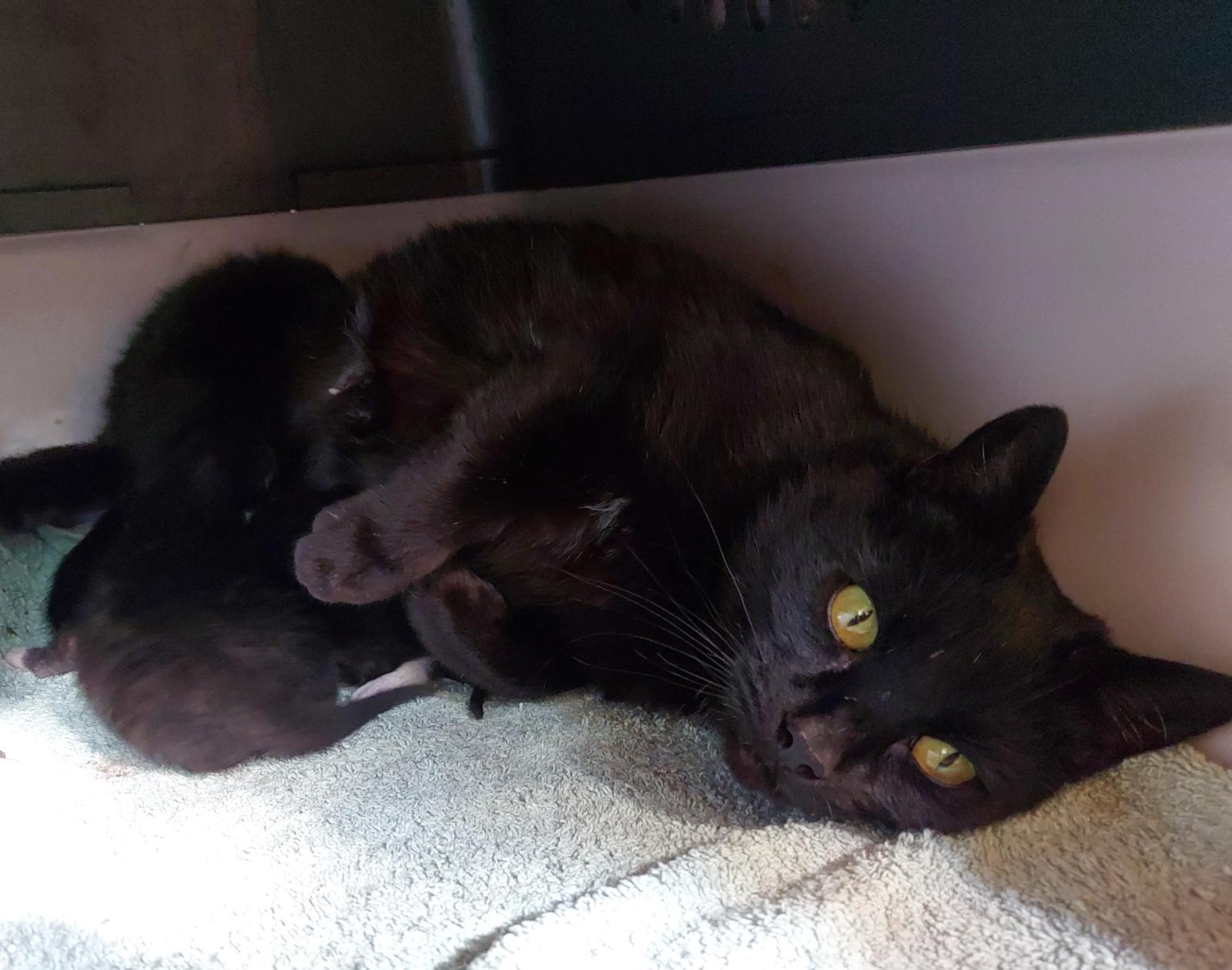 Beauty-mit Kitten