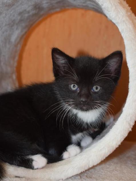 Acani kitten