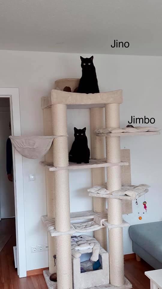 Jino und Jimob