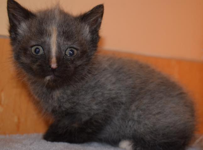 Molly Kitten