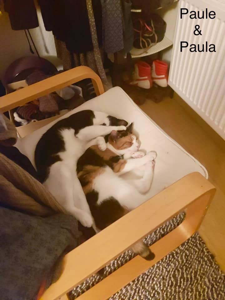 Paula und Paule