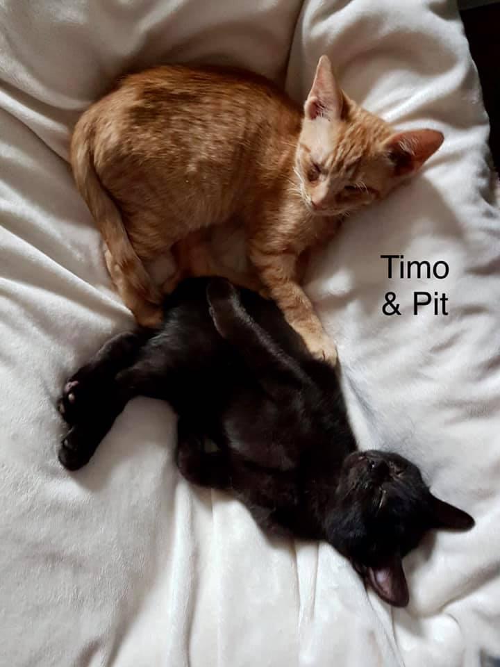 Timo und Pit