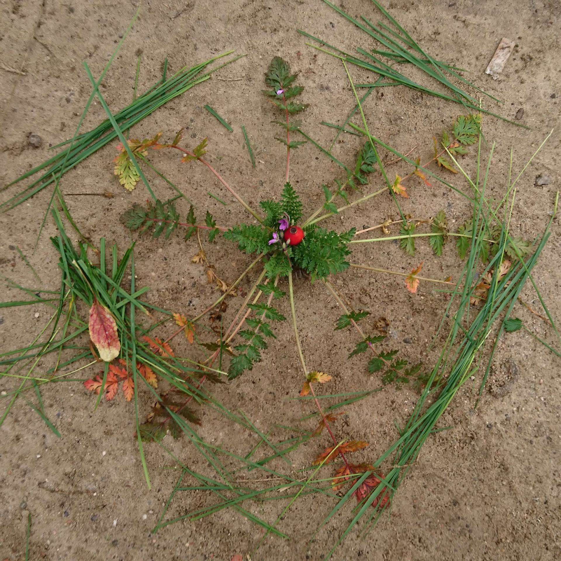 Landart: Mandalas aus Naturmaterialien