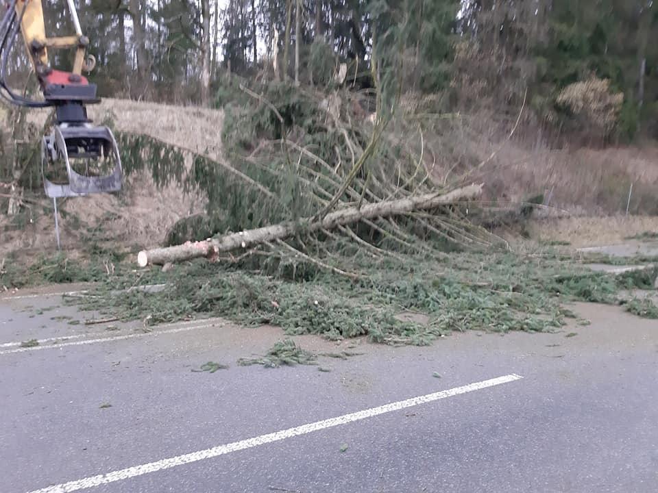 Mehrere Bäume auf der Fahrbahn im Schutzbereich 10.02.2020