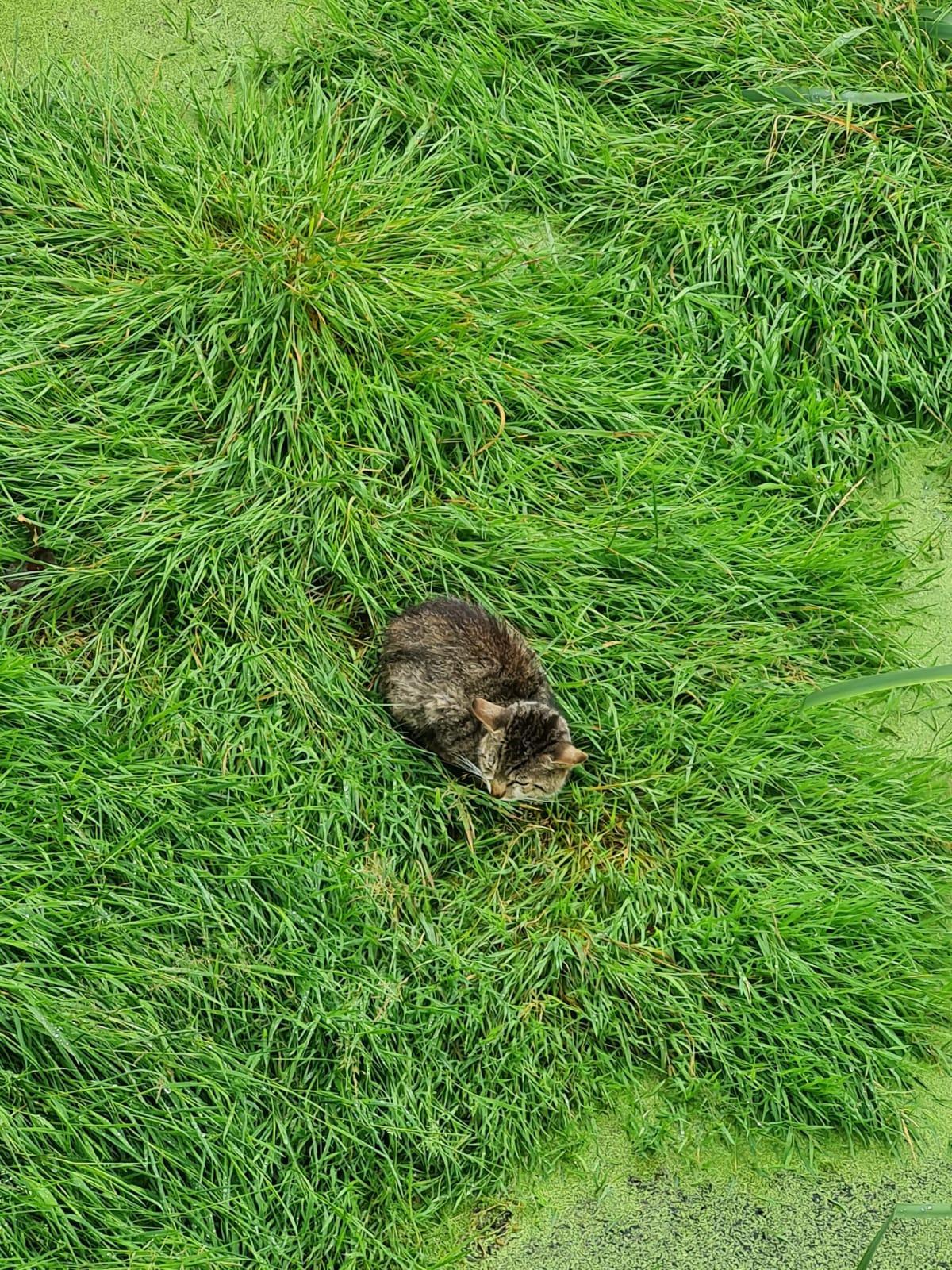 Kleintierrettung, Katze in Güllegrube 02.07.2021