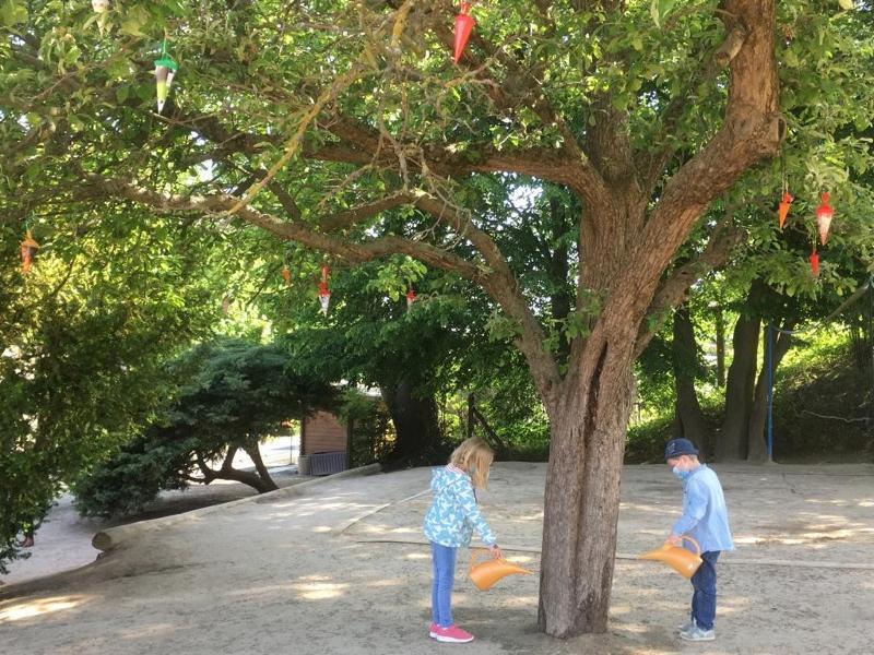 Zuckertütenbaum 2