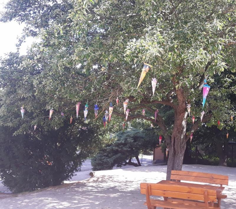 Zuckertütenbaum 4