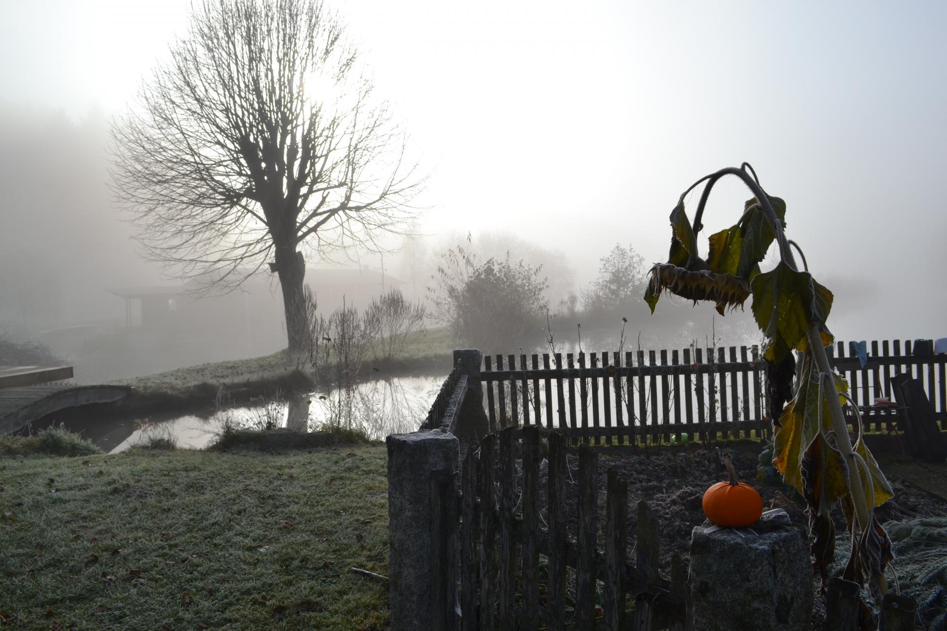 Herbst in Zell 2
