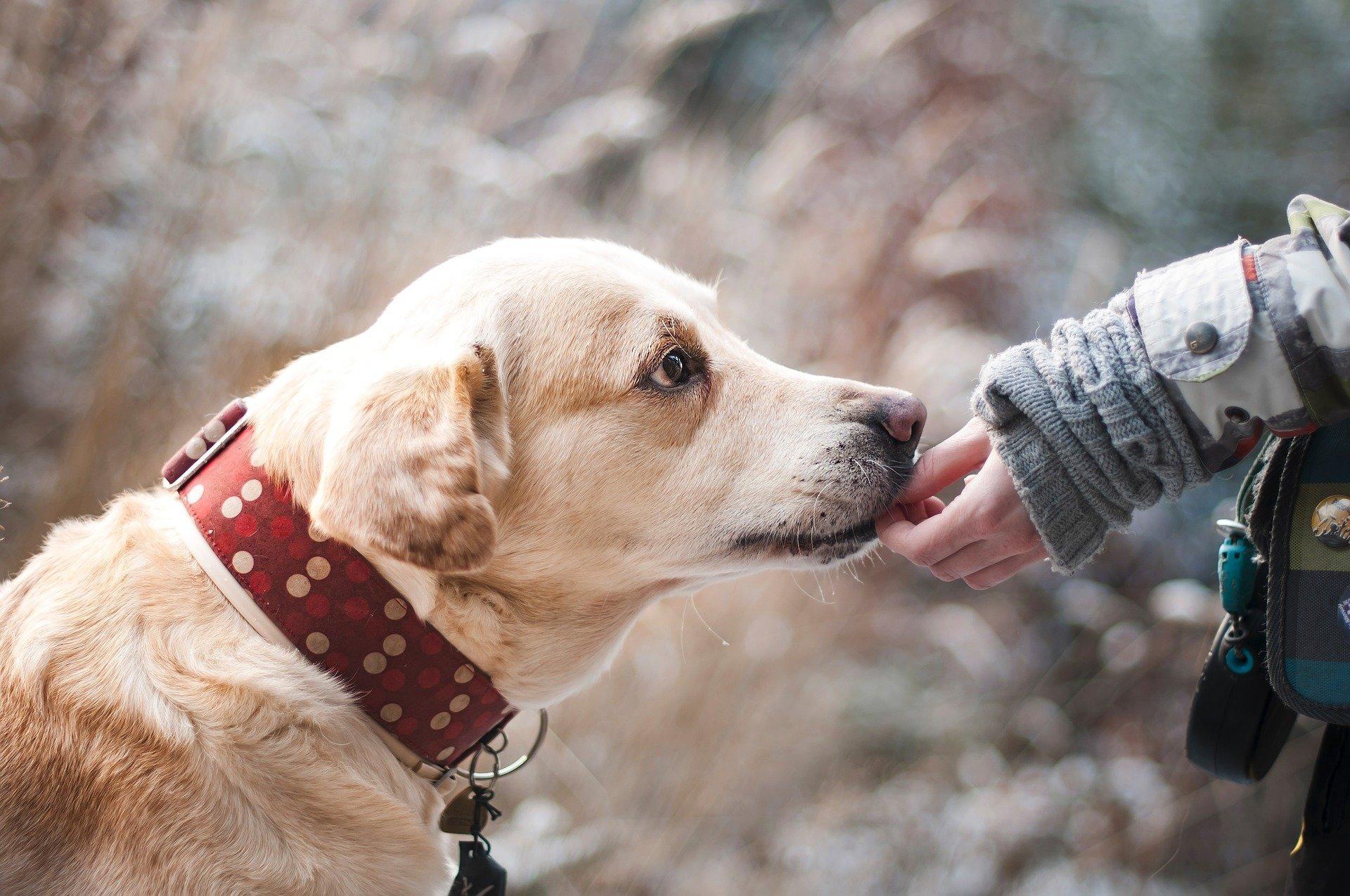 Bild Hund mit Besitzer, Quelle: Bild von Lenka Novotná auf Pixabay