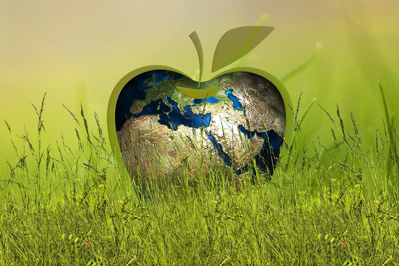 Nachhaltigkeit, Bild von Gerd Altmann auf Pixabay
