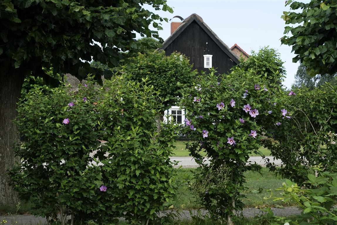 Sommerlicher Blick auf ein Ernhaus in Sieversdorf
